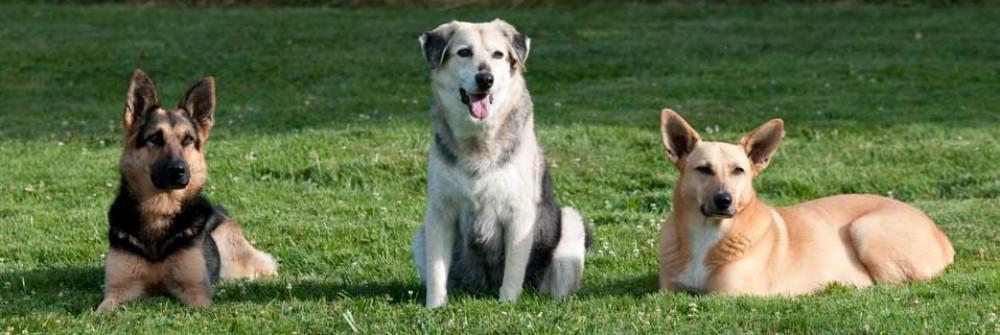 Harmony Life with dogs®-Praxis für Hundeverhaltenstherapie, Hundereisen, Hundephysiotherapie, Handicaphunde