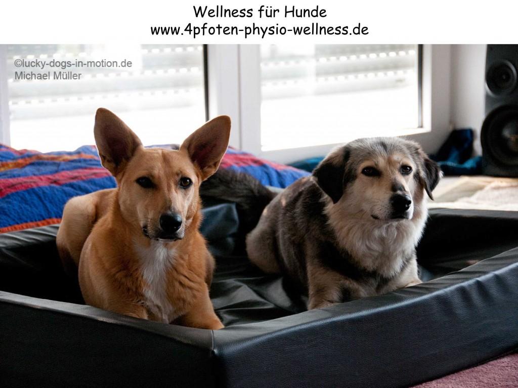 werbebanner-wellness